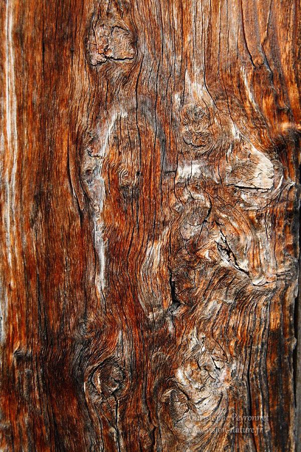 Graphisme du bois