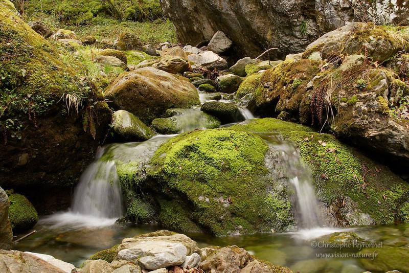 Un ruisseau pyrénéen en sous-bois.