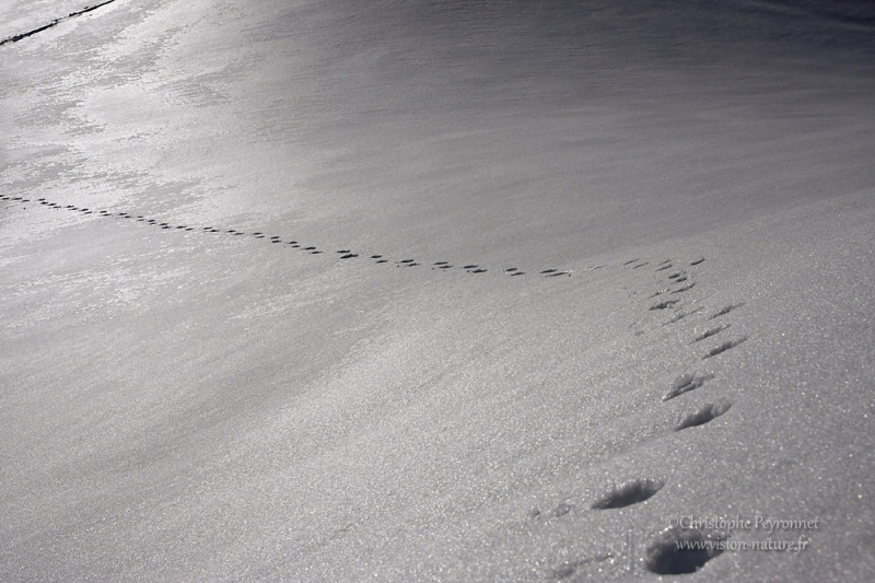 Traces hivernales