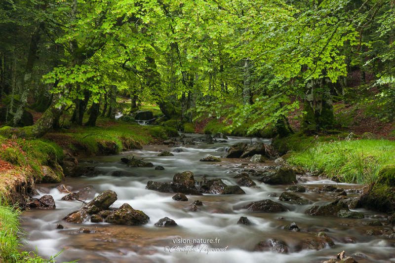 Ruisseau sur le Massif d'Irati, Pays Basque