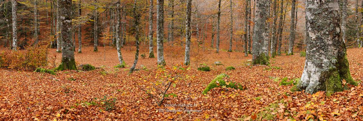Ambiance autour du Massif d'Irati, Pays Basque