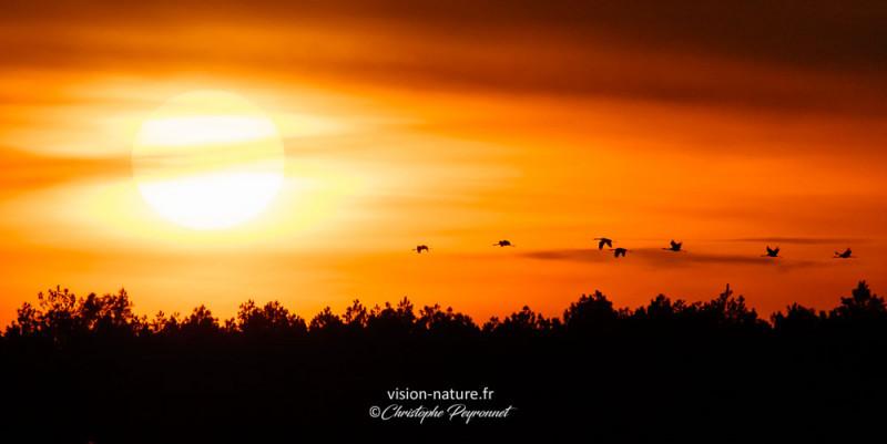 Vol de grues au coucher du soleil
