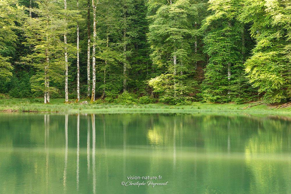 Forêt et étang d'Iraty
