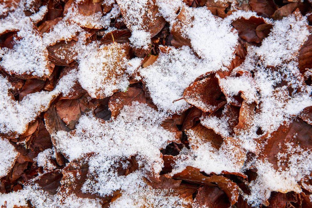 Premières neiges d'automne