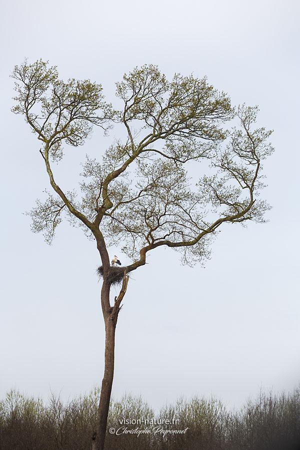 L arbre aux cigognes